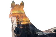My horse and added one of our sunset photos to it.  Double exposure