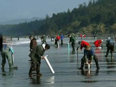 Digging for razor clams on the Long Beach Peninsula. Photo courtesy of Street Cafe. Long Beach Washington, Flags Of Our Fathers, Washington State History, 42nd Street, Tide Pools, Surrey, Great Photos, Surfing, Places To Visit