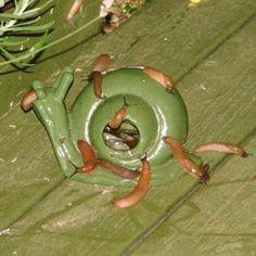 Slakkenval ideaal om slakken te bestrijden in de tuin.