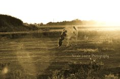 Low light cow photo
