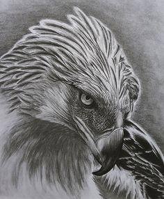 Aguila monera por BlaackLizzard - Animales | Dibujando.net