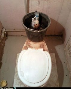 Oh no!  Beware of amateur repairs-by-owner