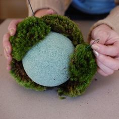 May 2017 - hanging moss ball tutorial @ design sponge. also, this picture is funny when taken out of context (sculpting a tiny furry green toupee! Diy Garden, Garden Crafts, Garden Projects, Garden Art, Moss Wall Art, Moss Art, Growing Moss, Deco Nature, Deco Floral