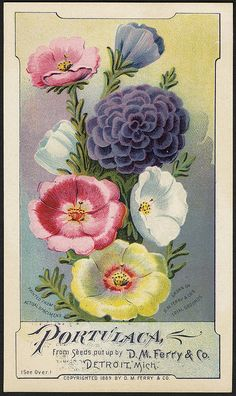 Portulaca seeds by D. M. Ferry Detroit, Mich.