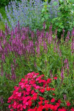 Neon-red pinks (Dianthus) steal the show in this bed backed by airy blue 'Walker's Low' catnip (Nepeta racemes) and spikes of 'Pink Friesland' salvia (S. nemorosa).   Photo: Dale Horchner   thisoldhouse.com