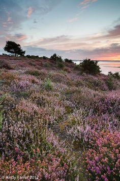 Arne, Dorset, England.  Sunrise at Arne by Andy Farrer