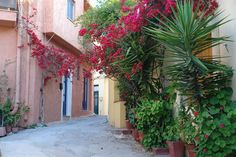 Archanes Village, crete, greece - will enjoy a home cooked meal by local women of the village. Local Women, See It, Sicily, Italy Travel, Places Ive Been, Roots, To Go, Plants, Crete Greece
