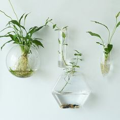 These simple but stunning wall decorations.   27 Soothing Terrariums To Bring Tranquility To Your Home