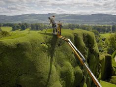 Explore hanging gardens, Italianate terraces and the ancient yew hedges trimmed into billowing shapes at Powis Castle