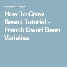 How To Grow Beans Tutorial - French Dwarf Bean Varieties Growing Beans, Bean Varieties, Peach Trees, Rustic Gardens, Garden Trees, Dwarf, Fruit Trees, Gardening, Homesteads