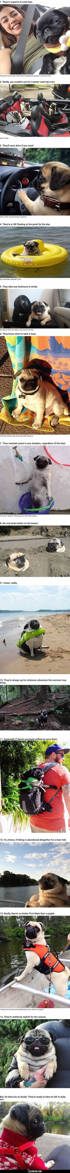 14 Reasons Pugs Are The Ultimate Experts In Summer Living#funny #lol #lolzonline