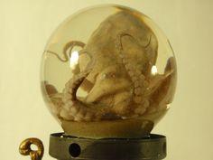 Preserved wet specimen octopus