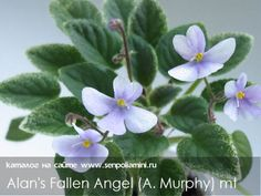 Alan's Fallen Angel