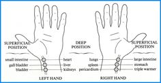 Learning the technique to differentiate between the 29 pulses is difficult. Qigong, Tai Chi, Reiki, Shiatsu, Chakra, Heart And Lungs, Acupuncture Points, Good Massage, Acupuncture