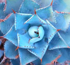 12 Examples of #Macro #Flower #Photography from Mother Nature Network. Full link here: http://www.mnn.com/lifestyle/arts-culture/stories/12-inspiring-examples-of-macro-flower-photography