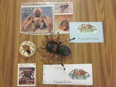 Inspired Montessori and Arts at Dundee Montessori: Huge Unit on Insects
