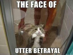 Okay, that's pretty hilarious! Look at that face! Poor kitty!