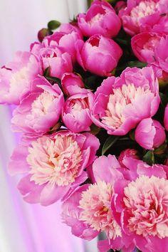 Pink peonies.