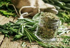 El Romero es una planta medicinal y también es aromática esencial para muchos platillos de gastronomía.