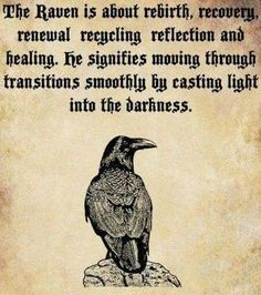If a raven totem has come into our life, magic is at play. Raven activates the energy of magic and links it to our will and intention. With this totem, we can make great changes in our life Vikings, Rabe Tattoo, Tatto Love, Quoth The Raven, Animal Spirit Guides, Raven Spirit Animal, Raven Art, Raven Totem, Crow Or Raven