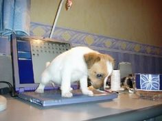 Don't let your puppy be a computer geek. It never turns out well!