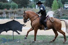 Calendar Working Equitation 2014