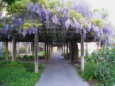 Mission Garden, Santa Clara, California