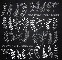 Letter Discover White Hand Drawn Herbs Clipart Chalkboard clipart Herbs Silhouette PNG EPS AI Vector Laurel Clipart Personal and Commercial Use Chalkboard Clipart, Chalkboard Doodles, Blackboard Art, Chalkboard Drawings, Chalkboard Lettering, Chalkboard Designs, Diy Chalkboard, Chalkboard Wedding, Chalk Lettering