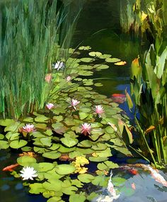 water lilies and ponds | Water Lilies And Koi Pond Painting