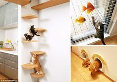 A cat house from Japan - designed for kitties.  Perfect, except it needs a big balcony-catio: fenced so kitties can't get out, but big enough that humans can enjoy it too with some books and some exotic cat-safe houseplants