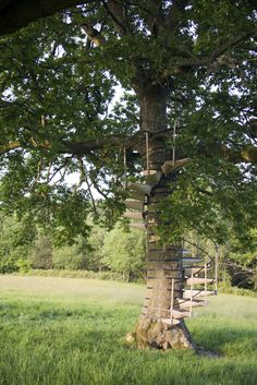 CanopyStairis a modular system of steps that can be attached without tools to form a spiral staircase around a tree trunk, allowing one to walk up into the canopy above.