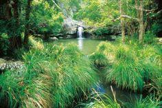 Kondalilla-Falls-Sunshine-Coast