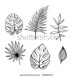 Hand drawn branches and leaves of tropical plants. Black outline set isolated on white background. Synadenium, monstera,palm leaf