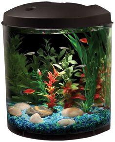 The Pros and Cons of Mini-Aquariums