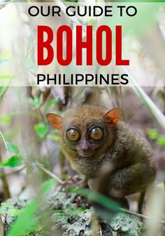 Our guide to things to do in Bohol, visiting Bohol with kids, how to get there and around and the best places to stay in Bohol as well as lots of other information to have a great stay on this fabulous island in the Philippines Visit Philippines, Bohol Philippines, Philippines Travel, Cebu City, Manila, Travel With Kids, Family Travel, Timor Oriental, Viajes