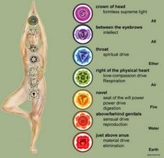 The word 'chakra' is derived from a Sanskrit word meaning 'wheel'; but perhaps even a better translation would be spinning wheel. If you could see chakras you would be able to see each primary chakra as a spinning vortex or wheel of energy; spinning inward from the front of your body towards the center point of that chakra on the kunilini and then spinning outward from that same point from your back.