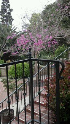 Beautiful outside eating area in Balboa Park San Diego