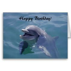 Smiling Dolphin Happy Birthday! Cards - Photography by D. M. Duhaime