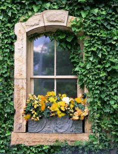 Window surrounded by ivy