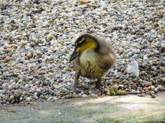 My Photos, Bird, Animals, Animales, Animaux, Birds, Animal, Animais