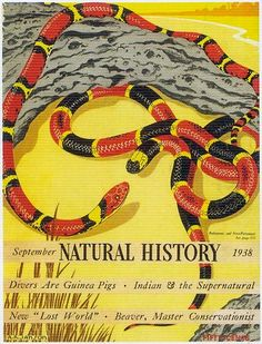 ♥ A. R. Janson, Natural History, September 1938