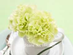 Bonsai carnation Seeds 200pcs 10kinds mix Flower Seeds Novel Plant for Garden Free Shipping