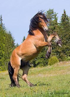 Stallion | Flickr - Photo Sharing!