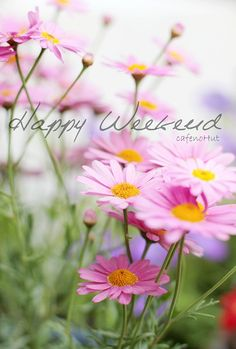 Happy Spring Weekend spring weekend days of the week weekend quotes happy weekend happy weekend quotes Days Of A Week, Weekend Days, Hello Weekend, Nice Weekend, Daisy Love, Pink Daisy, Happy Weekend Quotes, Happy Friday, Happy Tuesday