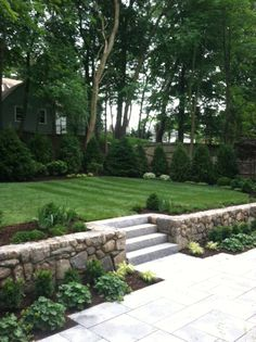 Carey Ezell Landscape Design. Granite terrace and steps with field stone retaining wall and upper lawn surrounded by Frasier firs, Arborvitae 'Dark American', Rhododendron, variegated dogwood, holly, boxwood, and siberian cypress. Wall planted with Lady's mantle, boxwood and Japanese fern grass