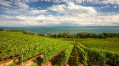 lake of neuchatel; Quelques Photos, France, Power Boats, Switzerland, Vineyard, Images, Travel, Outdoor, Food