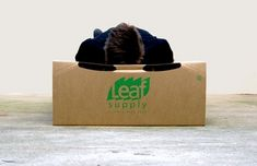 cardboard box emergency bed