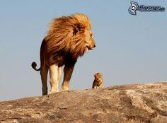 Löwe und Löwenbaby, Felsen, Himmel