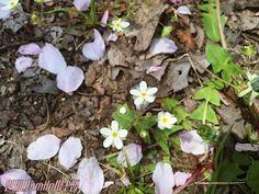 미술활동::벚꽃꾸미기/만들기/봄꽃만들기/벚꽃활동모음 : 네이버 블로그 Plants, Blog, Blogging, Plant, Planets