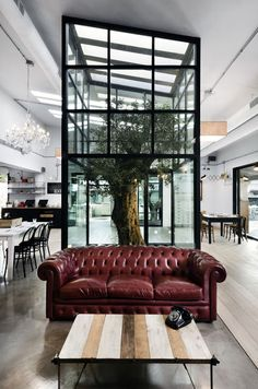 outside inside with a tree in a restaurant
